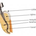endodoncja_0